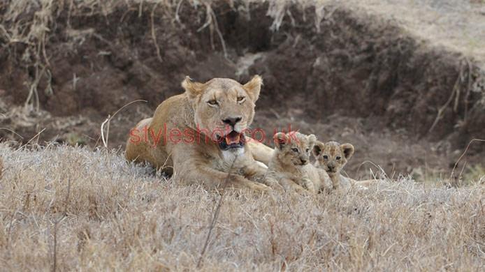 bushtreksafaris_ngorongoro_16