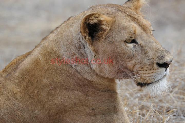 bushtreksafaris_ngorongoro_15